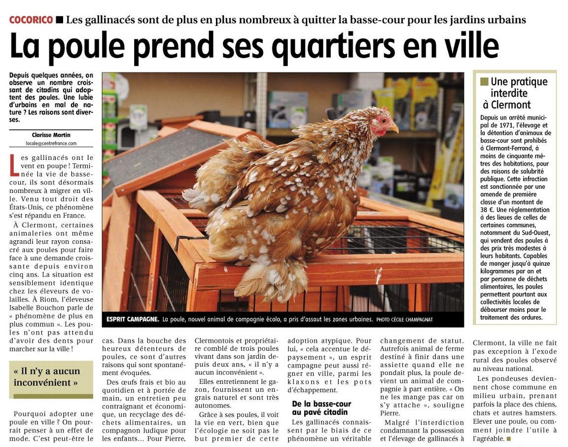 La poule prend ses quartiers en ville groupe des lus - Poules en ville reglementation ...